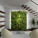 mekana uygun dekoratif bitkiler