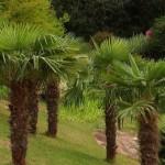 dekoratif bitki türleri