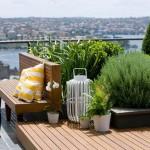 dekoratif bitkiler ve dekorasyon