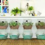 dekoratif bitkiler