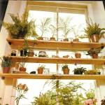 dekoratif mekan bitkileri
