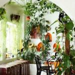 evde bitki dekorasyonu