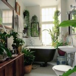 banyo_bitkileri_2