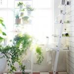 banyoda bitki dekoru